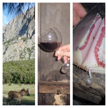 Itinerario vino Oliena